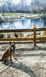 As put by one of our customers; …It is an amazing thing to come across such good people who love their jobs and provide such high quality service… Here are a few boarding, kennel, training, and German Shepherd dogs testimonials, referrals, and recommendations.