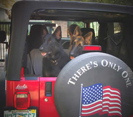 We assist so many veterans and tend to get emotionally involved with these owners and their handler training.