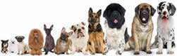 Chihuahua, Pug, Poodle, Whippet, French Bull Dog, Saint Bernard, Cone Corso, and Great Dane are pictured as boarding possibilities.